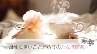 授乳期にこそ飲もう!母乳に良いことだらけのノンカフェイン たんぽぽコーヒー、たんぽぽ茶。
